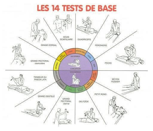 14-tests-base-kinesiologie